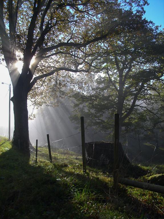 Höstmorgon i Bokedalen
